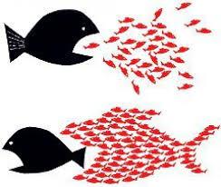 fish united